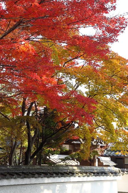 Saihouji0711303