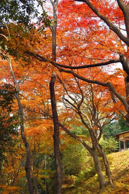 Maruyama0712036