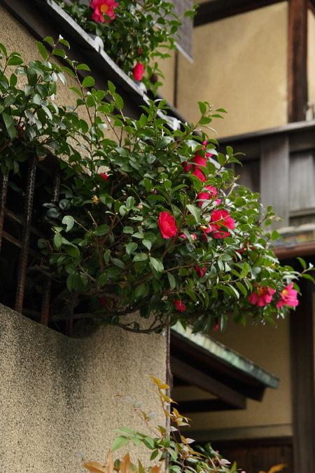 Yasaka0802013