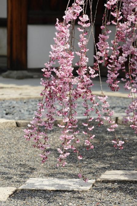 Myoukakuji0804075