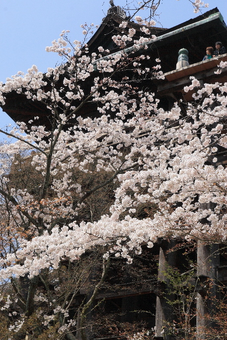 Kiyomizu08041116