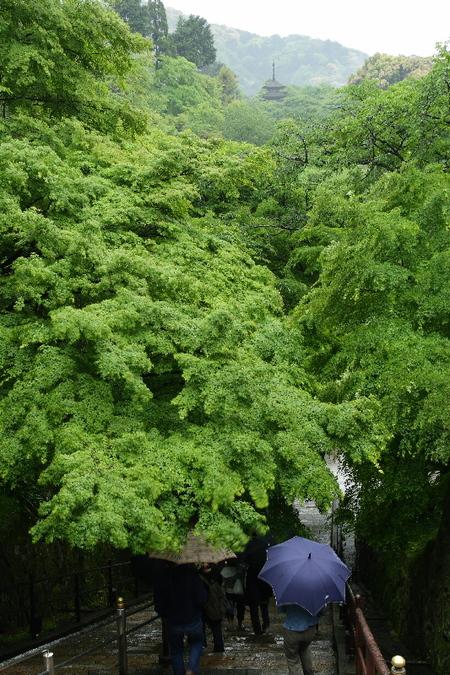 Kiyomizu0805135