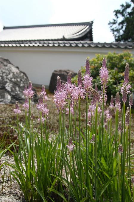 Daikoumyoyji09082_2