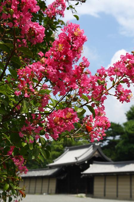 Kyotogyoen0809092