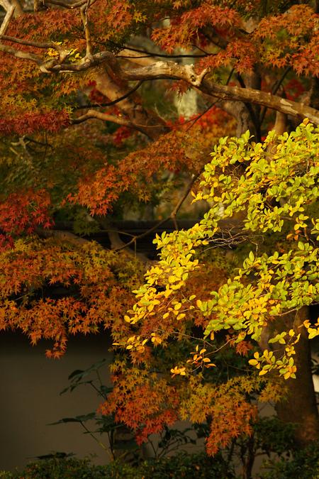 Tenjyuan0811066_3