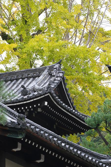 Maruyama0811133