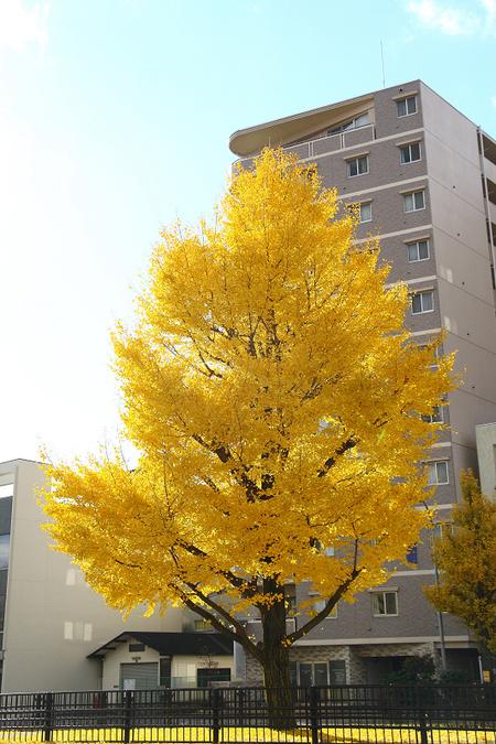 Honpouji08186