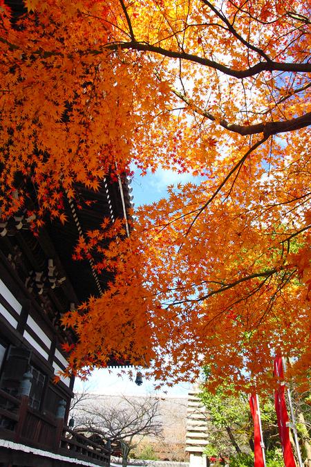 Myoukenji0812186