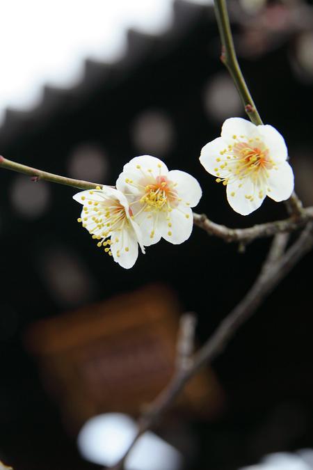 Houjyuji0902146