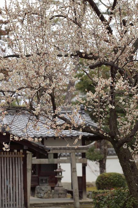 Syoukokuji0902233