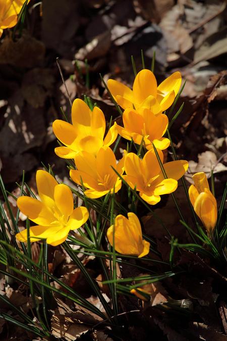 Spring_ephemeral0903031_2