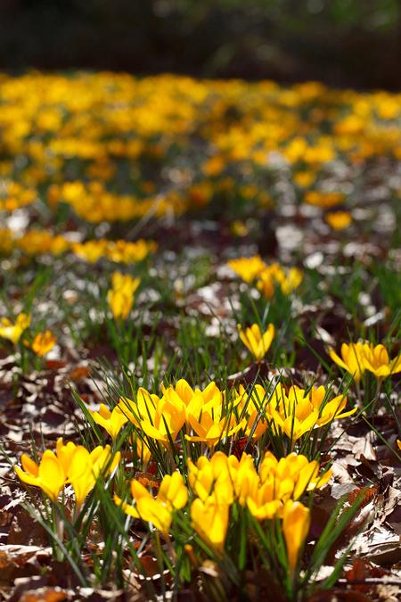 Spring_ephemeral0903032