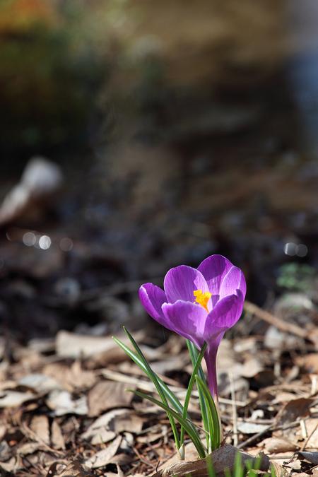 Spring_ephemeral0903033