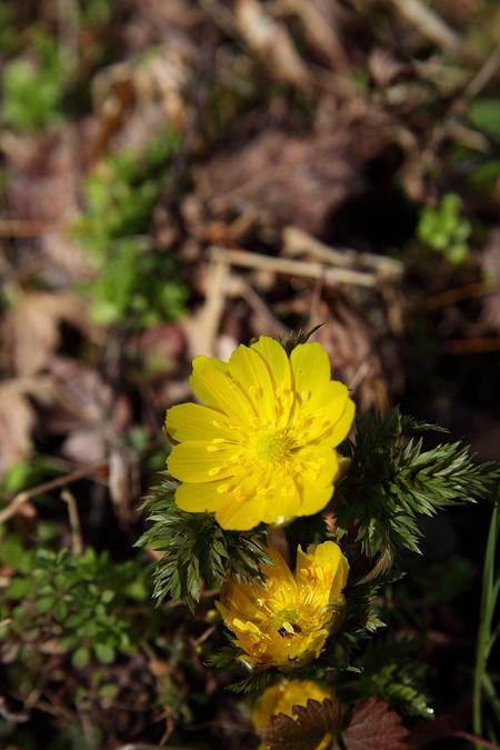 Spring_ephemeral0903036