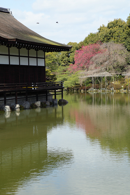 Kanhisakura0903073