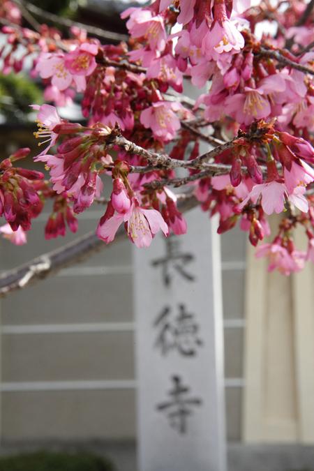 Tyoutokuji0903081