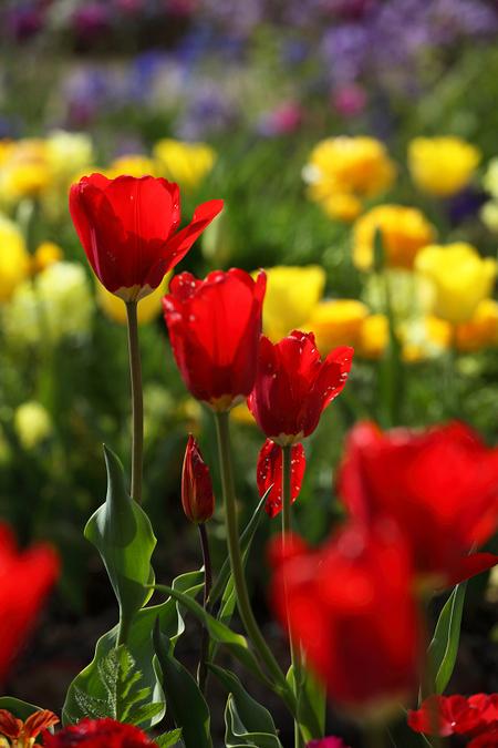 Garden0905111