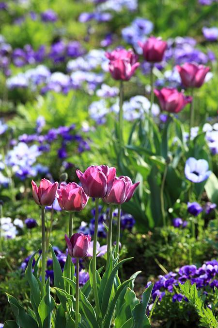 Garden0905115