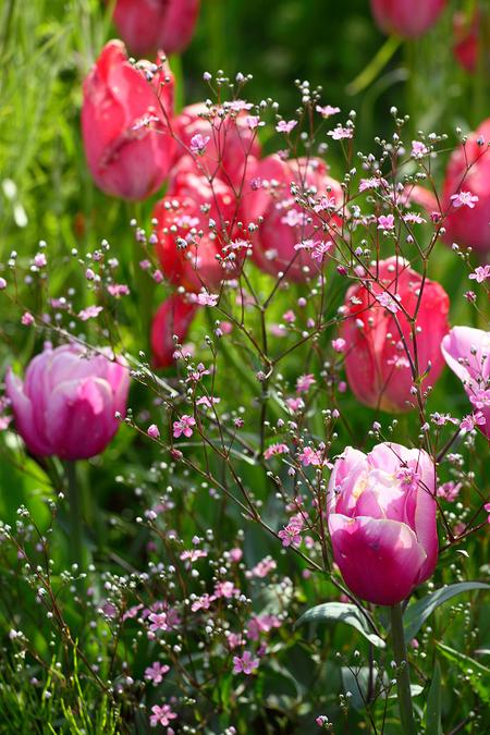 Garden0905116