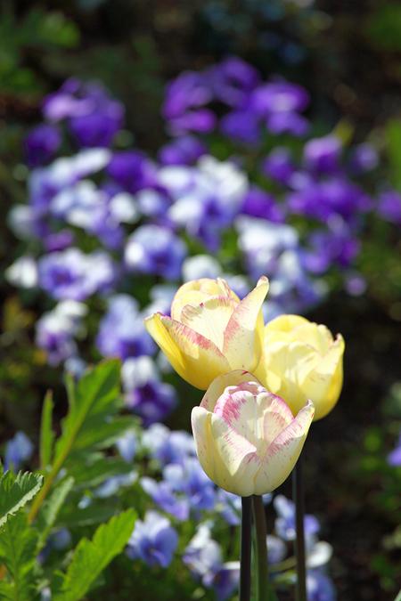 Garden0905117