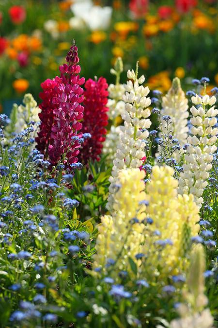 Garden0905118