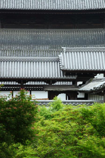Tofukuji0905146_3