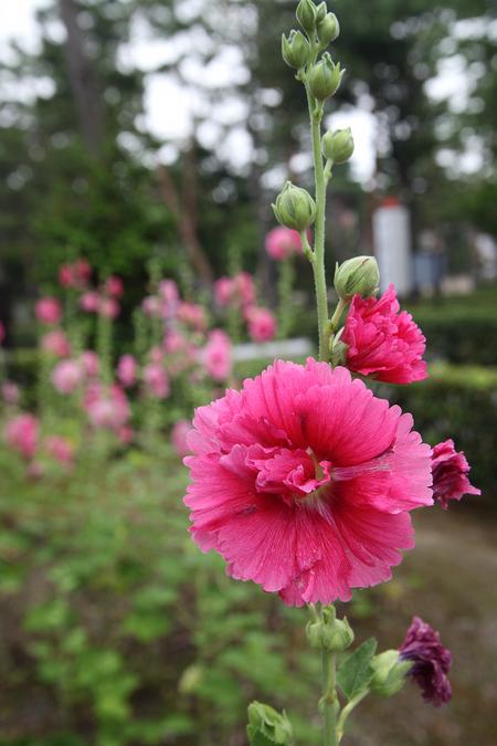 Syoukokuji0907033