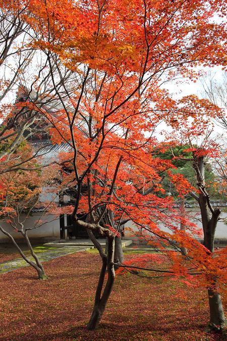 Myoukakuji0912052