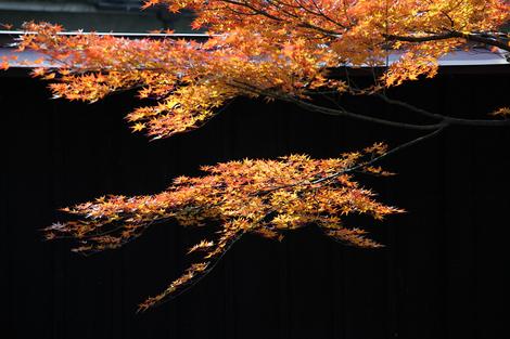 Myoukakuji0912057