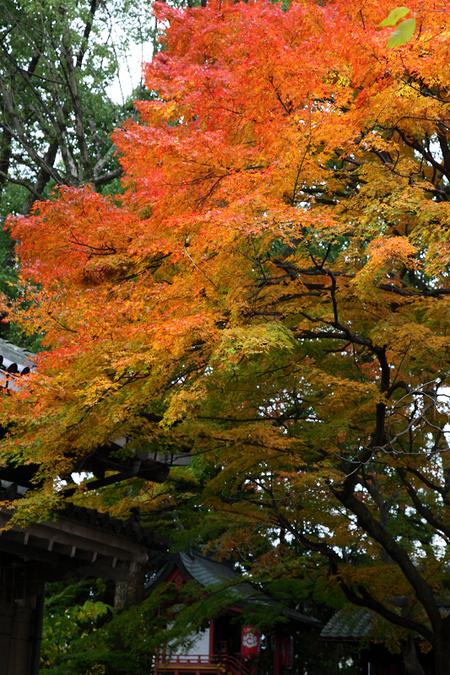 Kamigoryoujinjya0912053
