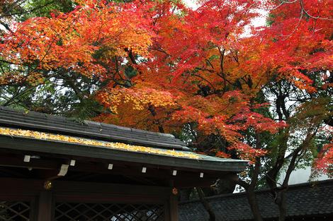 Kamigoryoujinjya0912055