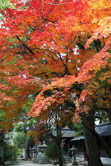 Kamigoryoujinjya0912056