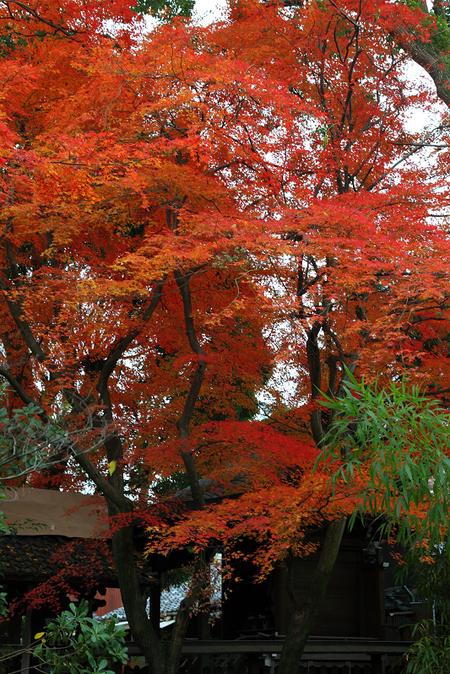 Kamigoryoujinjya0912057