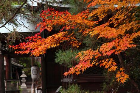 Kamigoryoujinjya0912058
