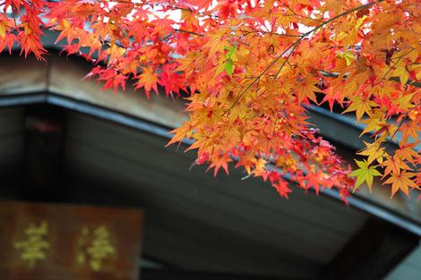 Kousyouji0912171