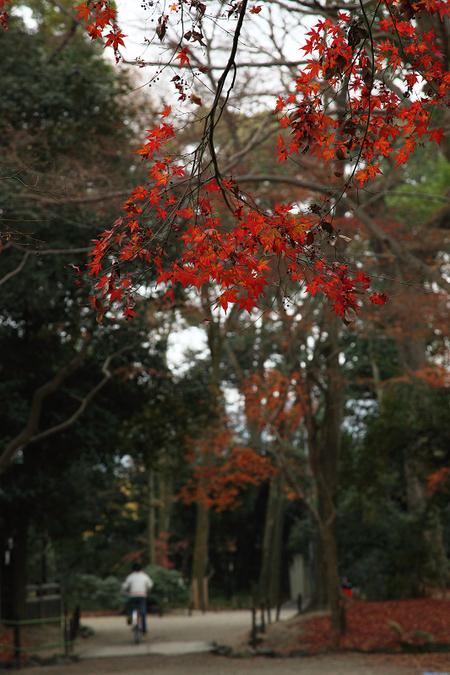 Tadasunomori0912266