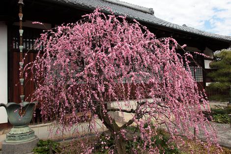 Yusyouji1003031