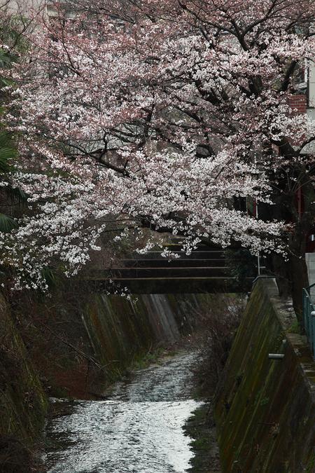 Kamiyagawa1003301