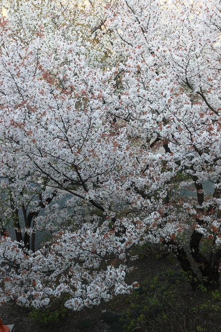 Kyotofutyou1004077