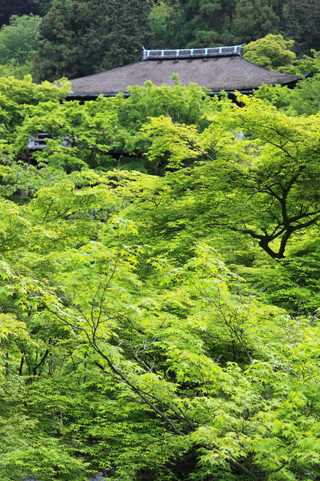 Kiyomizudera1005028