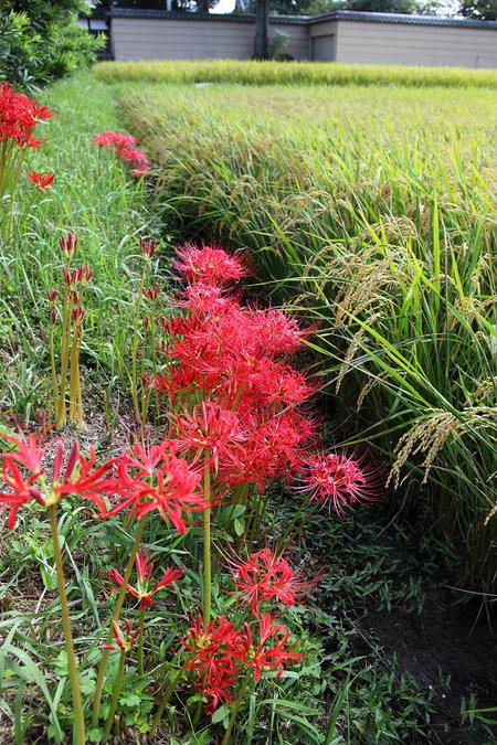 Kizugawa1010056