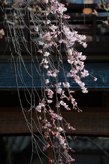 Ginsirakawa1103296
