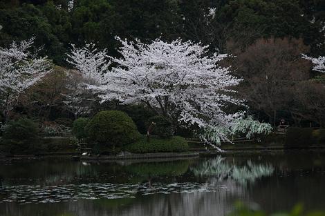 Ryoanji1104225