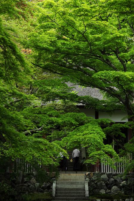 Jyoujyakkouji1105131