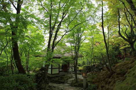 Jyoujyakkouji11051310