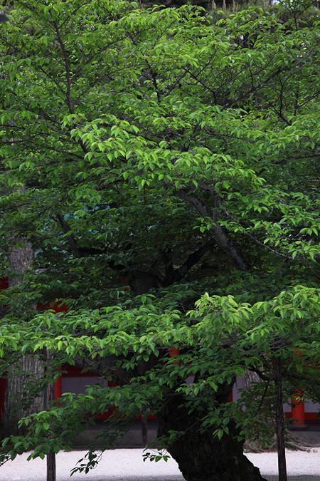 Hwianjinguu1105236