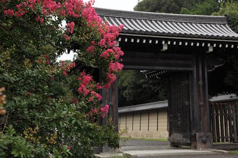 Kyotogyoen1108276