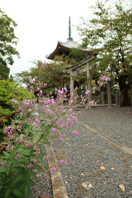 Honpouji1109121