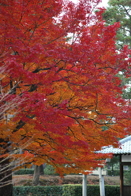 Syoukokuji1112152