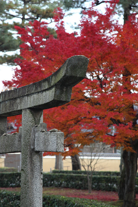 Syoukokuji1112155